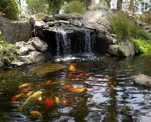 Водоем без фауны - мертвый