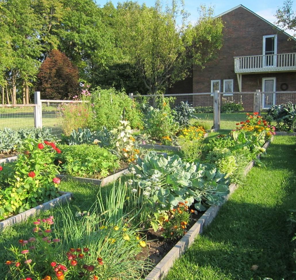 Сад огород фото 149