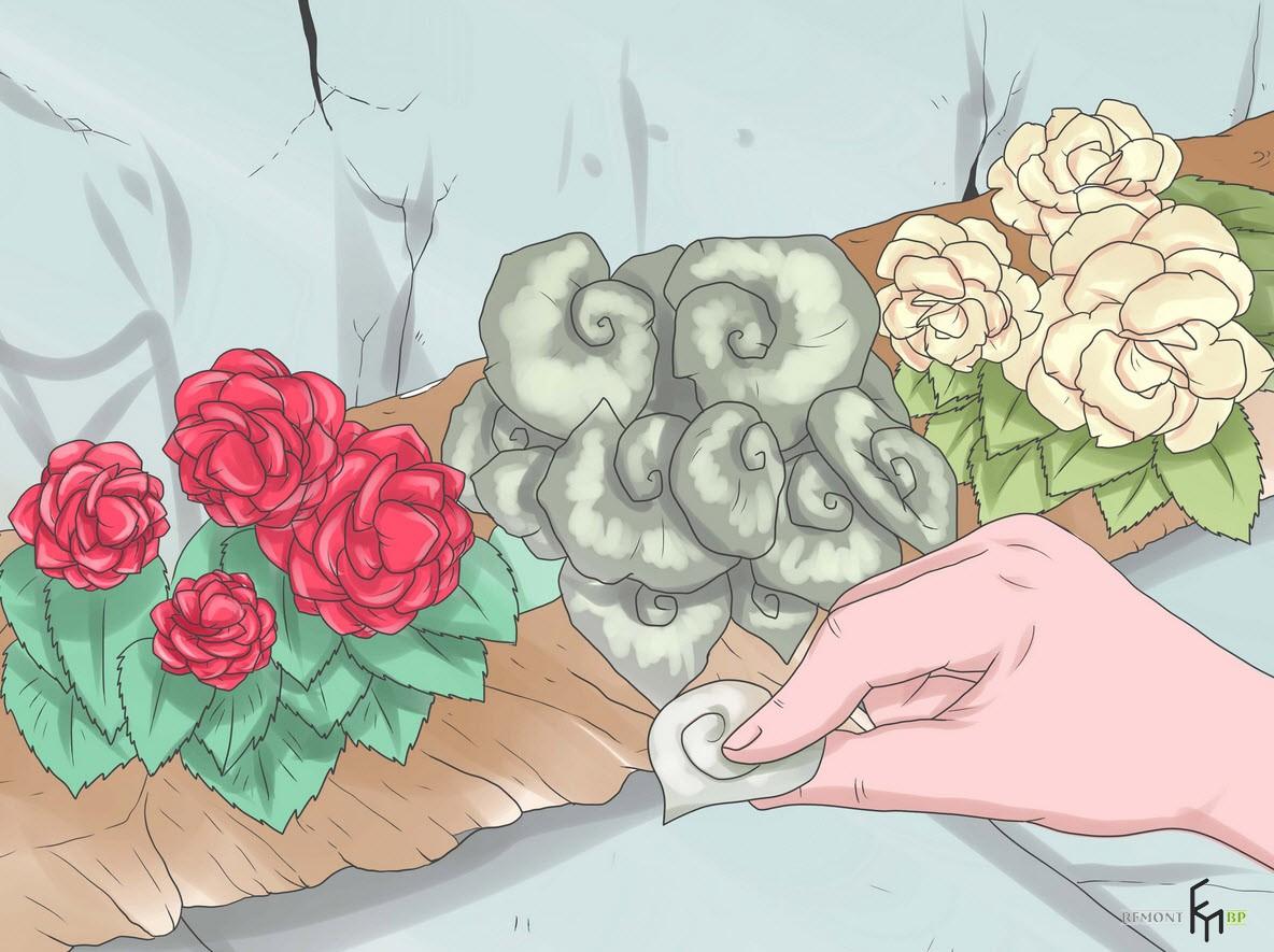 Забота о цветке