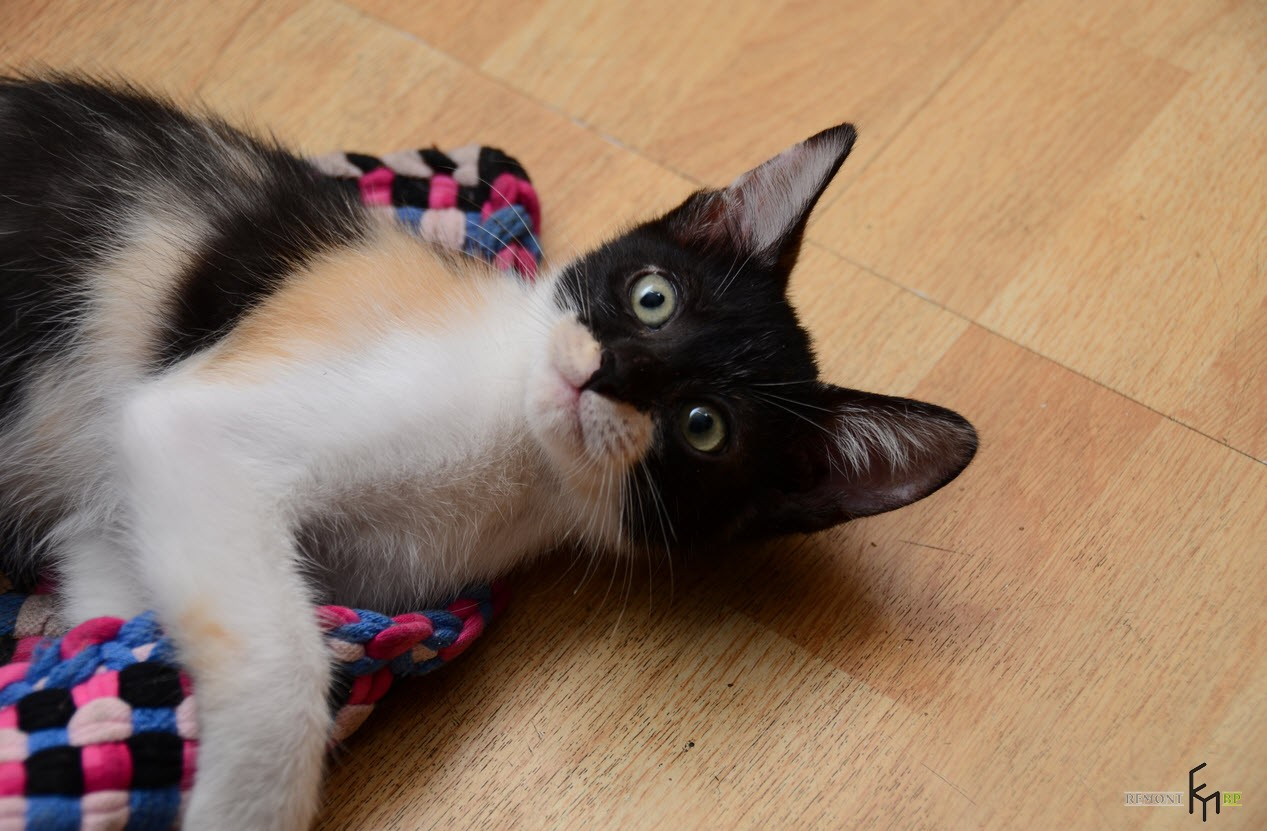 Котенок на цветном коврике