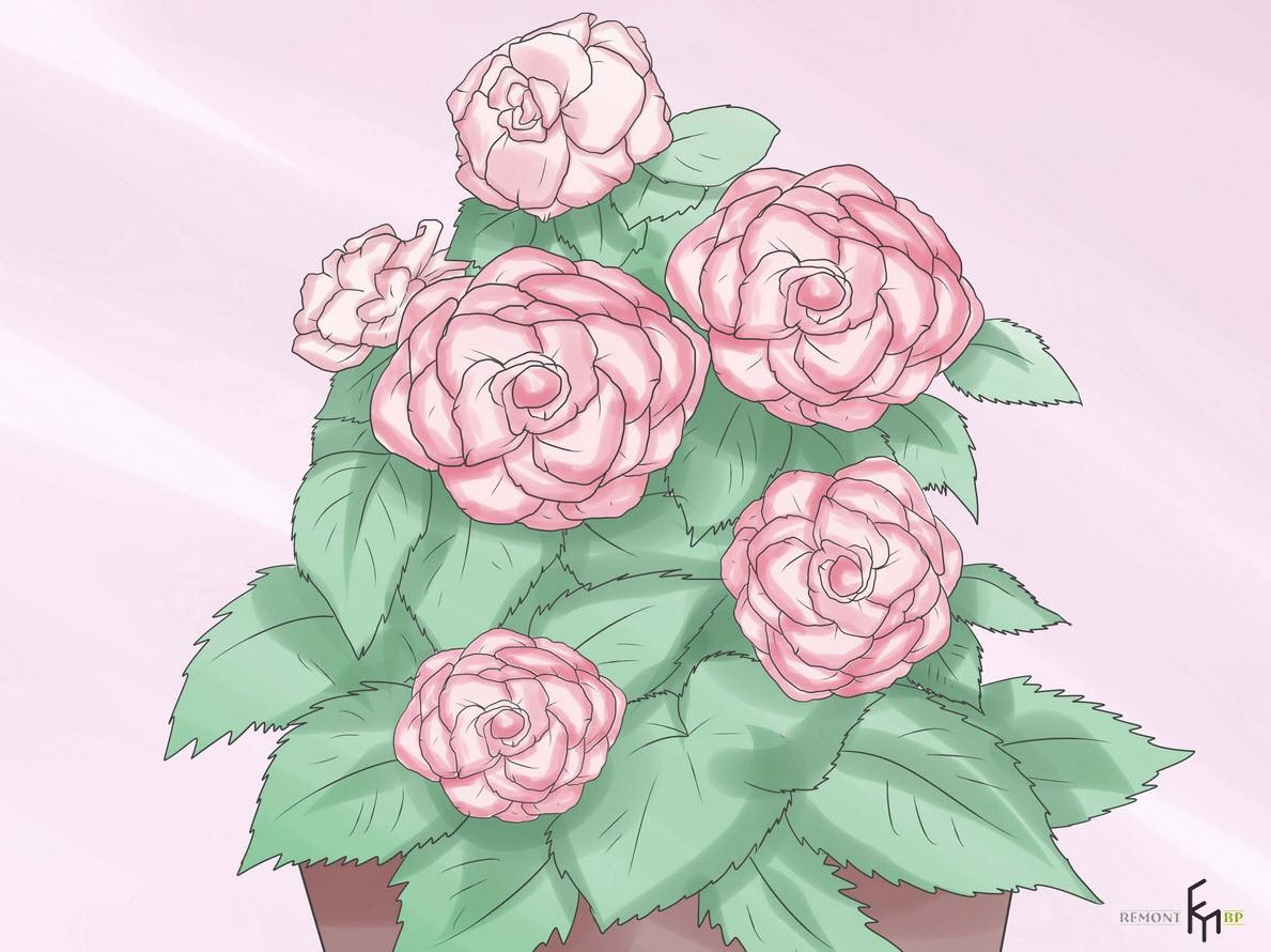 Магия цветка
