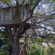Дом в раскидистом дереве