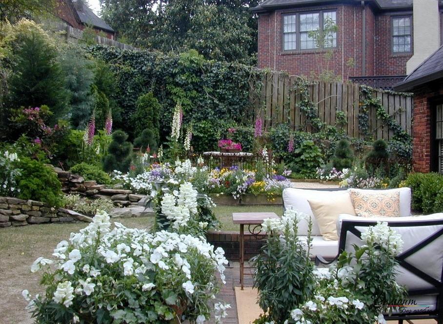 Кусты белой петынии во дворе
