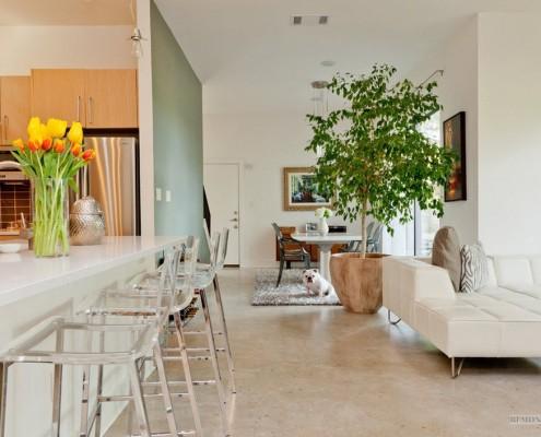 Кадочное растение в квартире