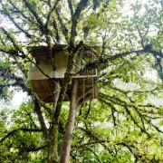 Домик в ветвях дерева