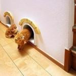 Коты в квартире идеи