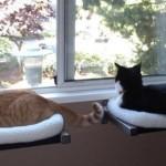 Коты в квартире идеи фото