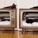 Телевизор для кота