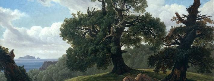 Ламинат дуб в интерьере