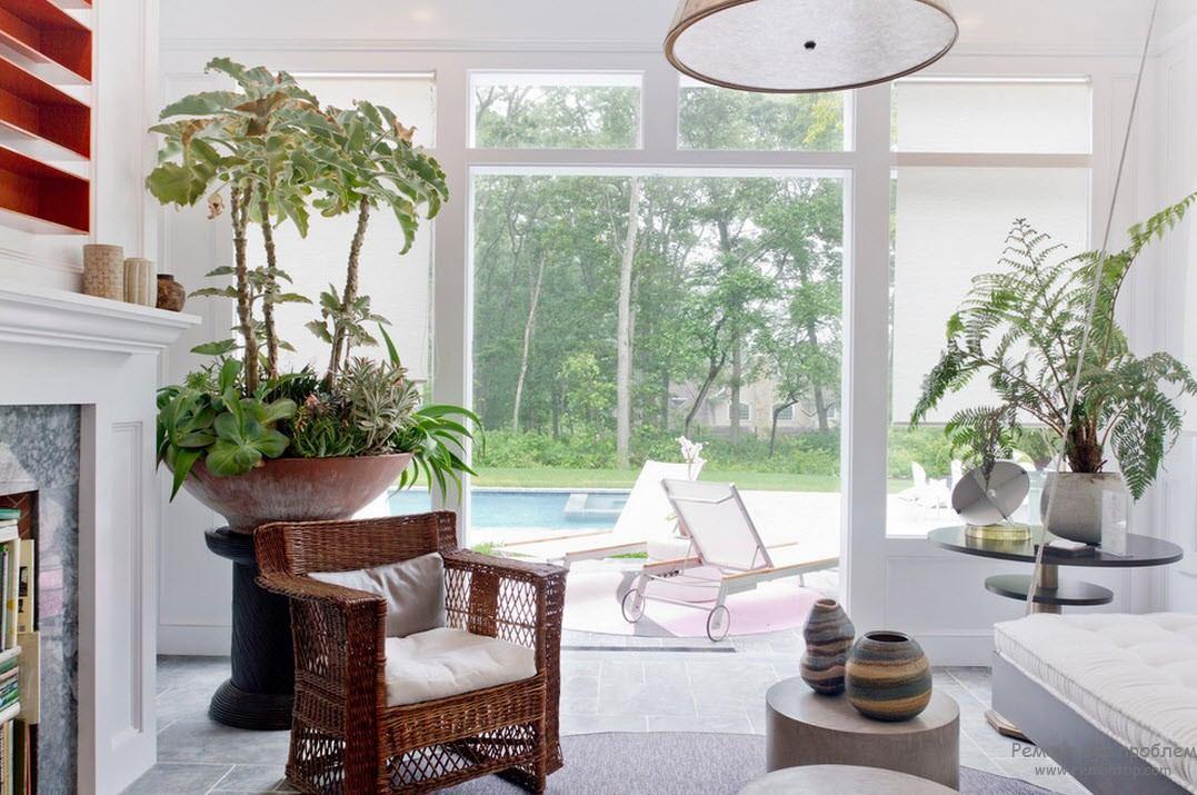 Растения в интерьере гостиной