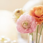 Растения в интерьере: оригинальные дизайнерские решения