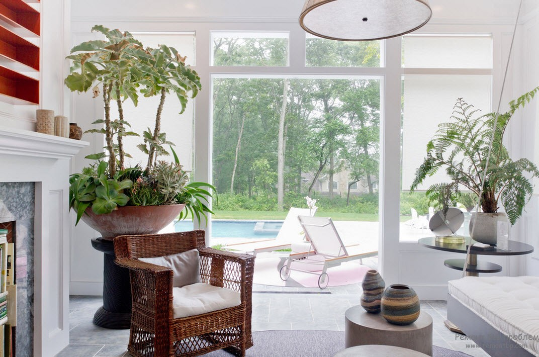 Растения в больших горшках - главное украшение комнаты