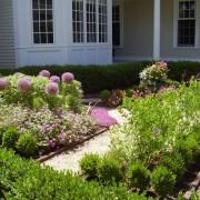 Сиреневые цветы на клумбе