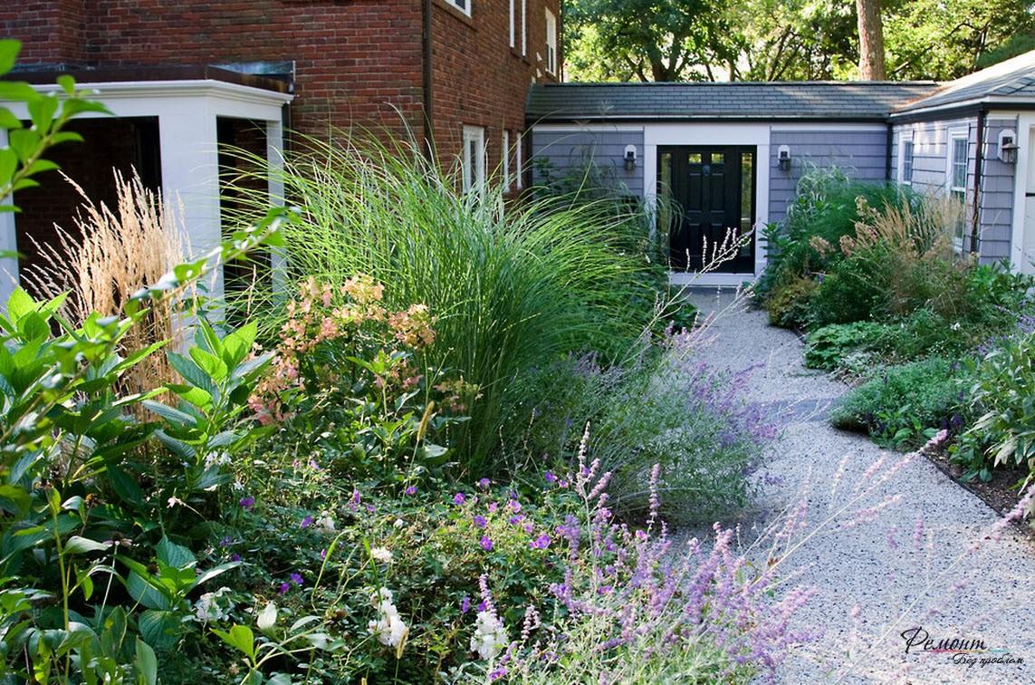 Кустарники на заднем дворе