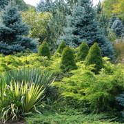 Можжевельник в ландшафтном дизайне — король садово-паркового искусства