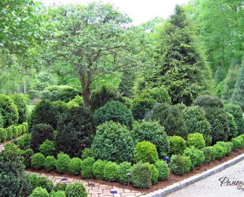 Хвойные растения в ландшафтном дизайне: идеи для современного двора