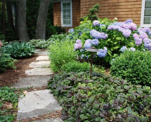 Необычные растения перед домом