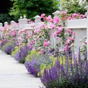 Необыкновенно нежные цветы, являющиеся настоящим украшением композиции
