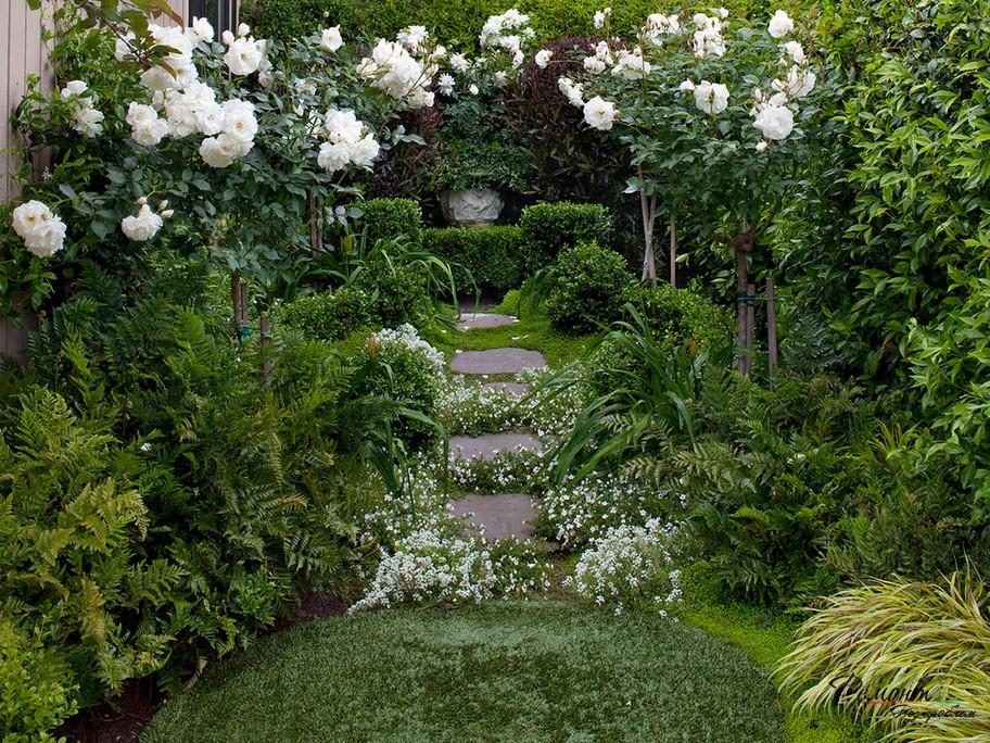 Белые вьющиеся розы
