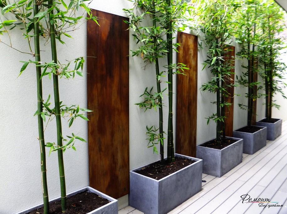 Белая стена и бамбук