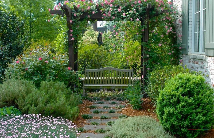 Вьющаяся роза наа деревянной арке