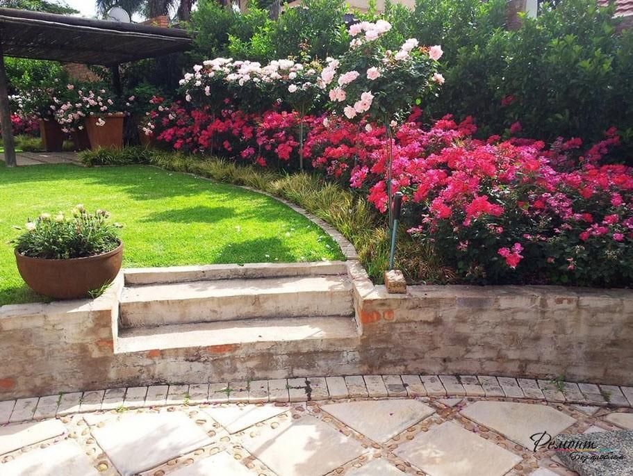 Стена из разных видов роз