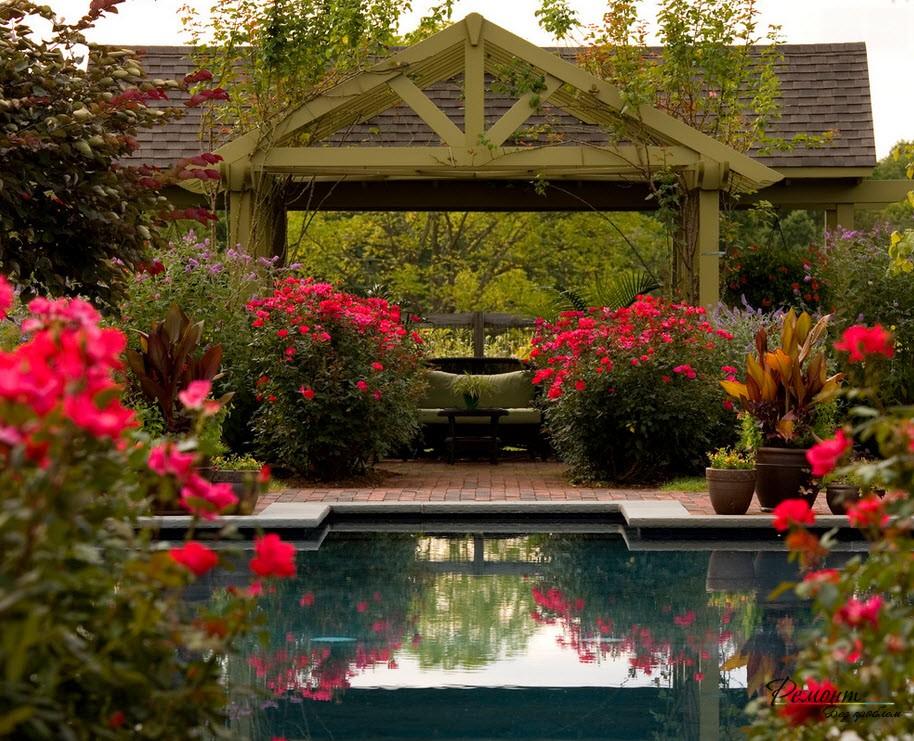 Розы вокруг бассейна