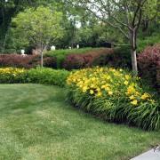 Лилейники - яркое дополнение цветочной композиции