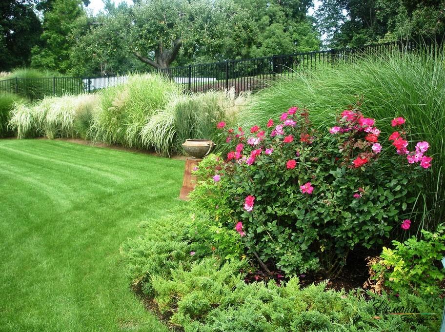 Розовый куст в обрамлении зеленого ландшафта