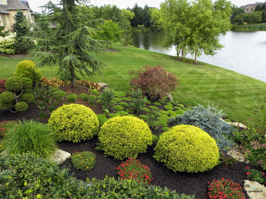 Кустарники и хвойники в дизайне сада