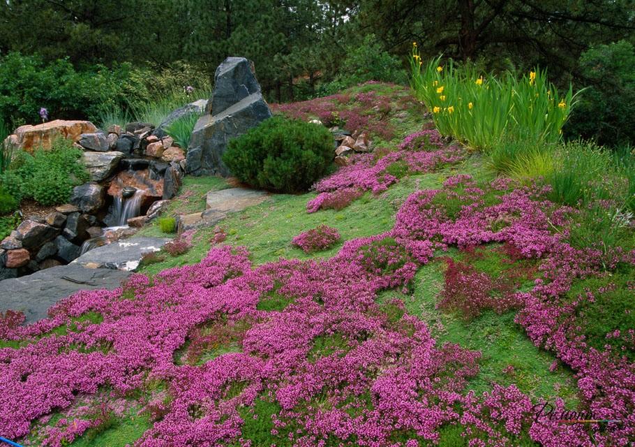 Красивый дизайн альпийской горки и красивые растения