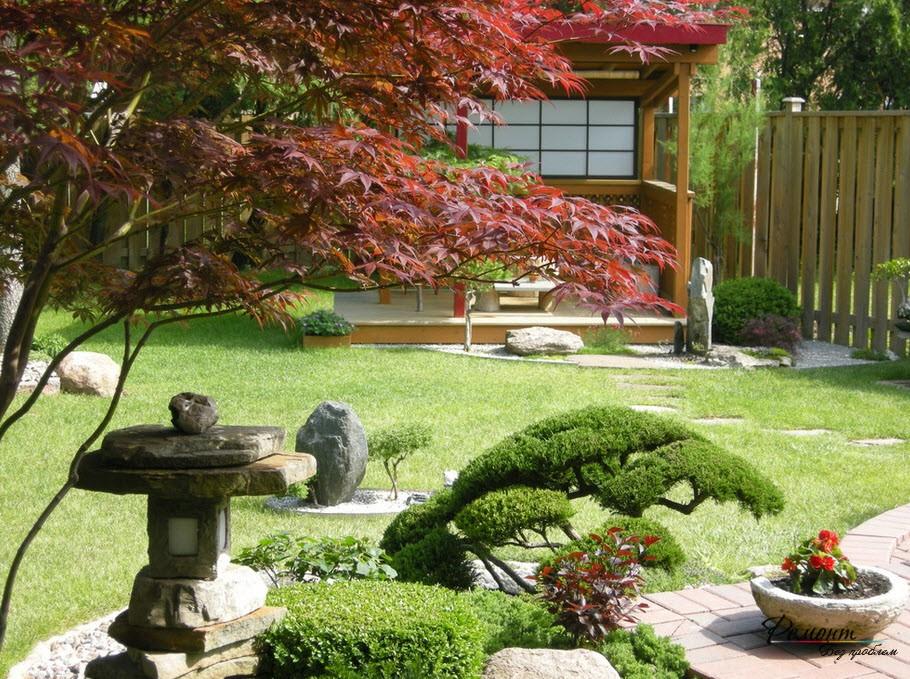 Стелющийся вид можжевельника, служащий фоном для красиворастущих растений