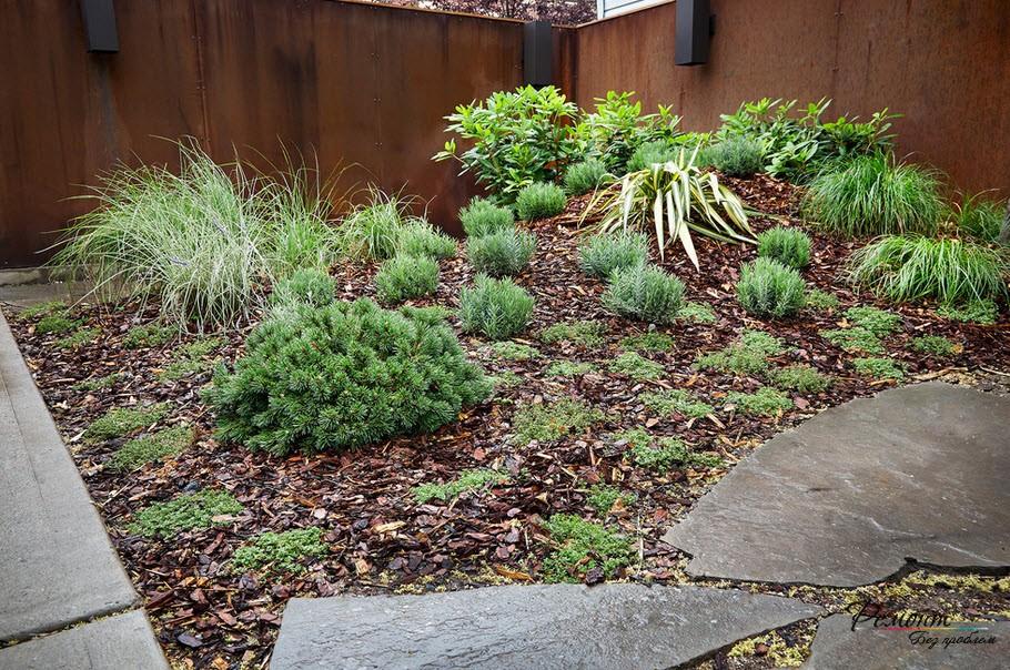 В каменистых садах используются карликовые сорта можжевельника