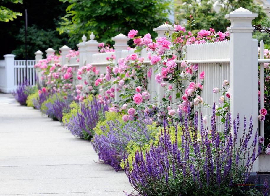 Нежно-розовые розы на белом ограждении