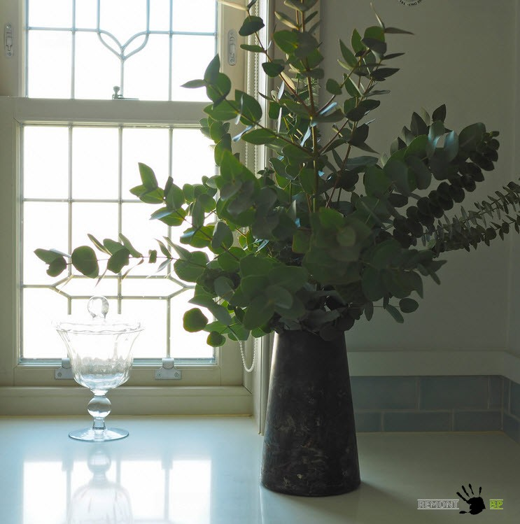 Растение в ванной