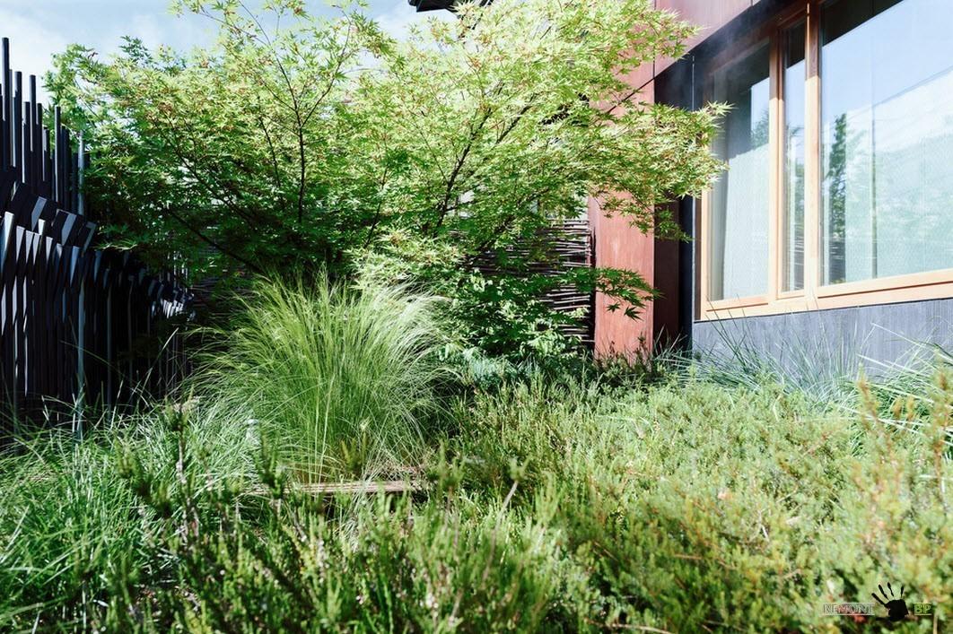 Обилие зелени во дворе