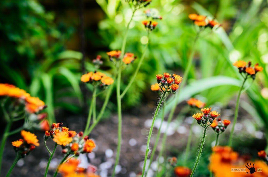 Растения для оформления ландшафтного дизайна
