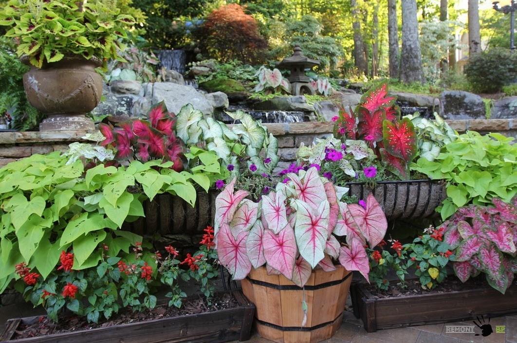 Растения в кадках для ландшафтного дизайна