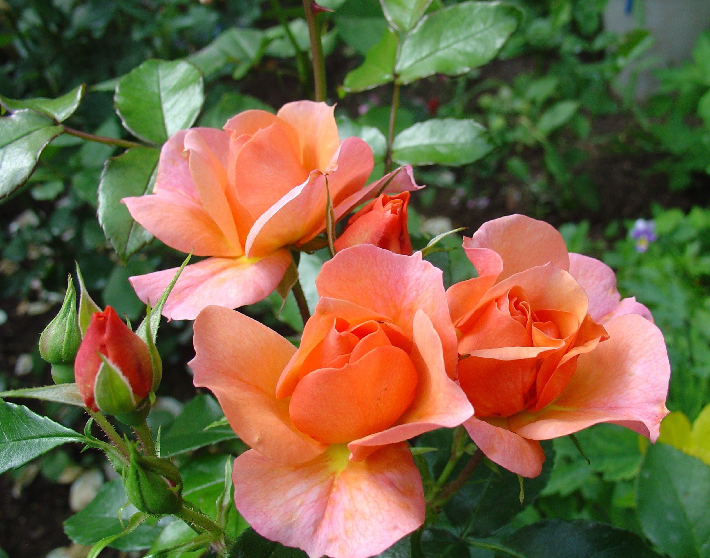 фото комнатных растений и цветов с названиями