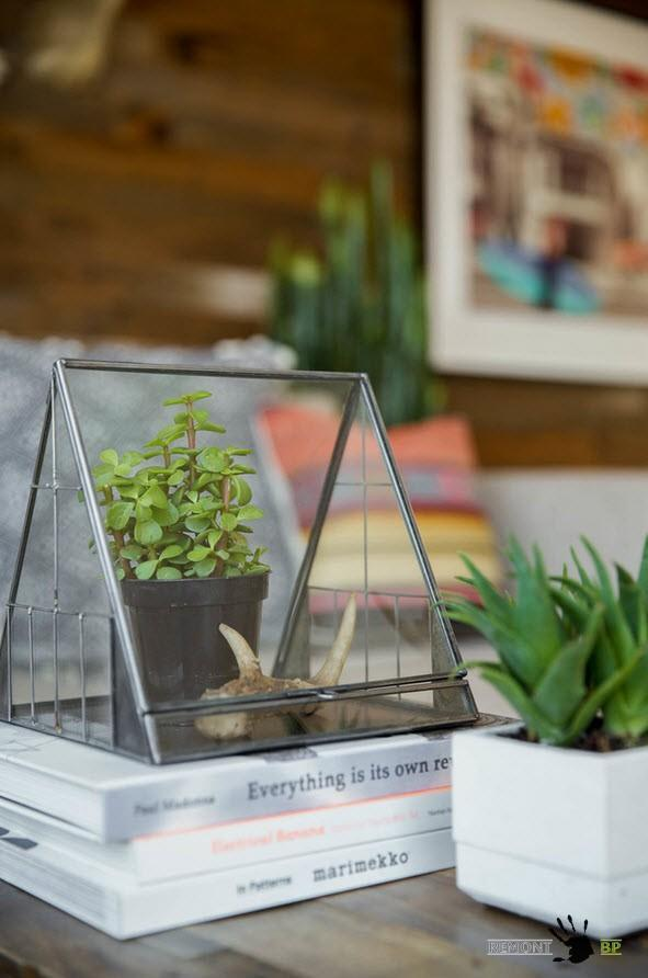 Живые растения  в качестве декора