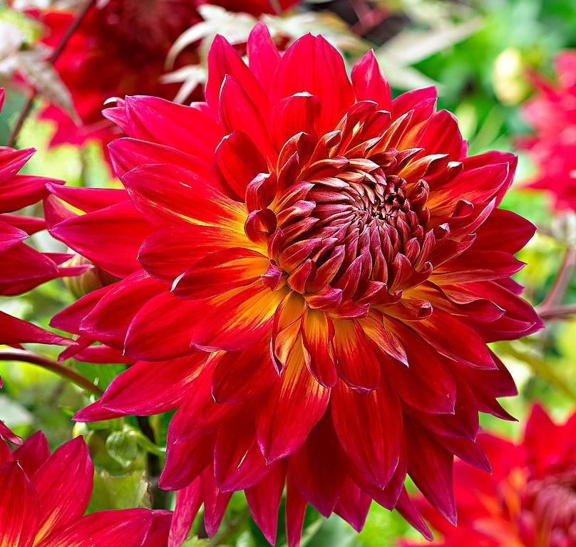 Яркое сочетание цветов на лепестках