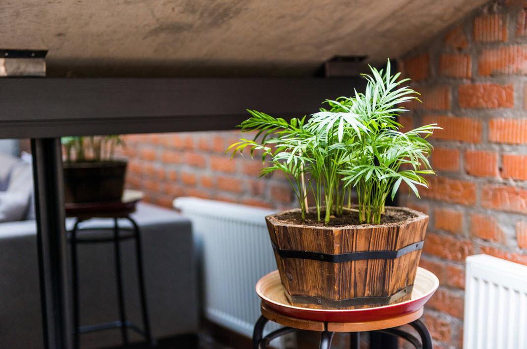 Зеленые растения на фоне кирпичной кладки