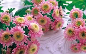 Небольшие розовые хризантемы
