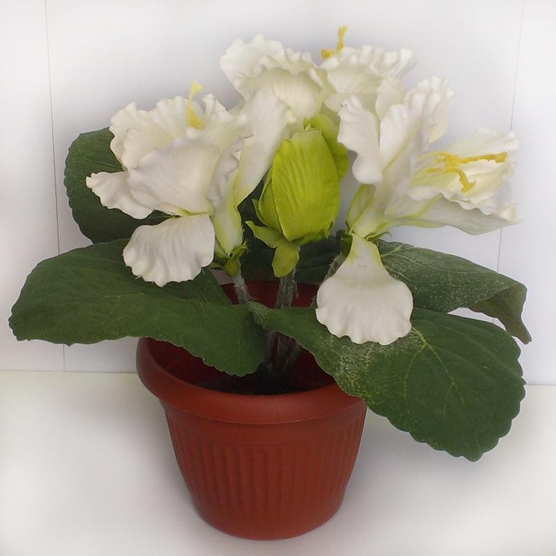 Белые цветки глоксинии