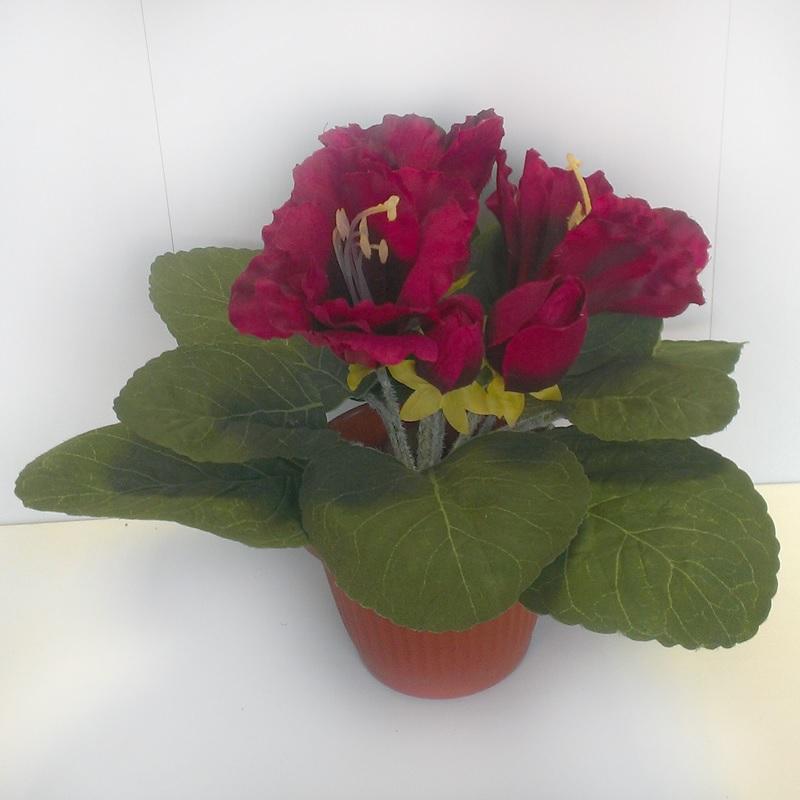 Бордовые цветы глоксинии
