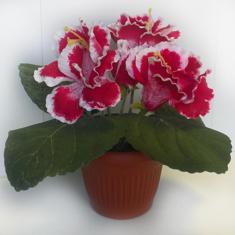 Контрастное сочетание цветов на лепестках