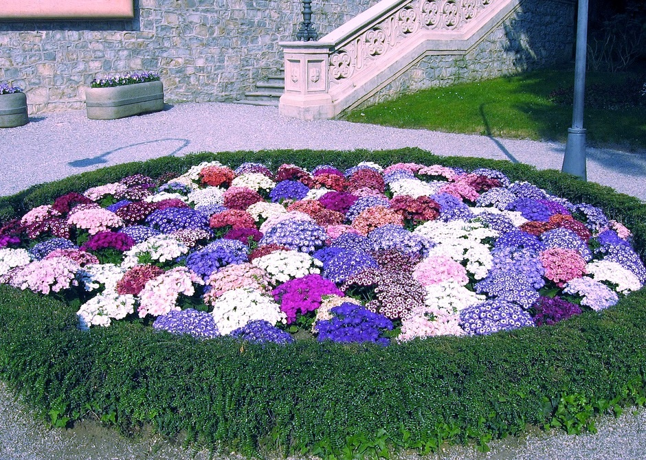 Дизайн клумб цветников своими руками фото