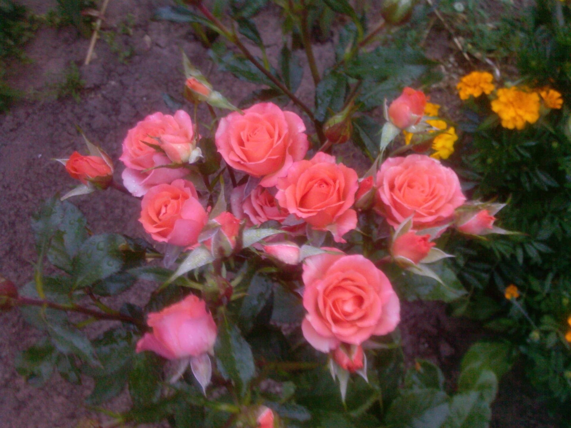 Букет розовых соцветий