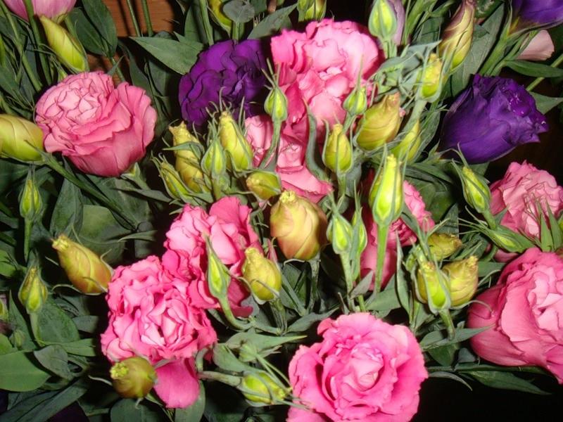 Ярко-розовые лизиантусы