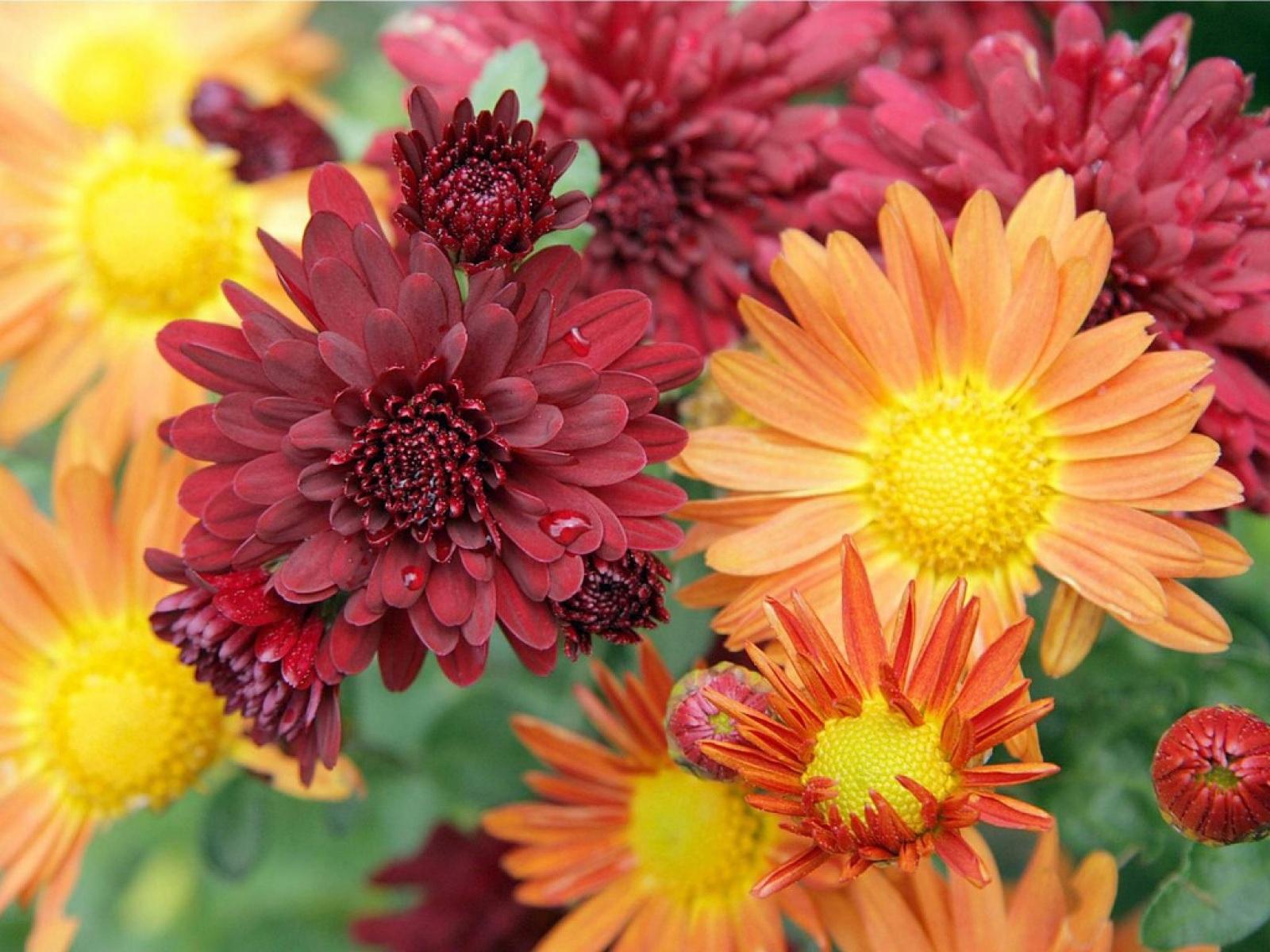 Яркие переливы оттенков на цветах